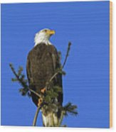 Bald Eagle On Blue Wood Print