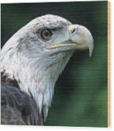 Bald Eagle On Guard Wood Print