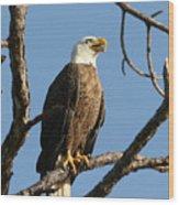 Bald Eagle On Pine Island Wood Print