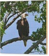 Bald Eagle On Watch Wood Print