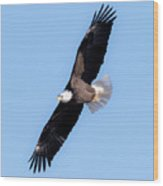 Bald Eagle Overhead  Wood Print