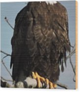 Bald Eagle Perched On Branch On A Windy Day Wood Print