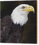 Bald Eagle - Pnw Wood Print