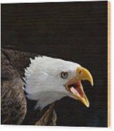 Bald Eagle Portrait 2 Wood Print