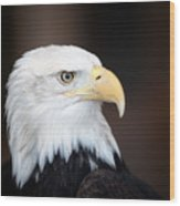Bald Eagle Portrait Wood Print