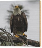Bald Eagle Protecting His Fish Wood Print
