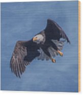Bald Eagle Ready For A Treat Of Interest Wood Print