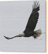 Bald Eagle Returns Home With Nesting Material Wood Print