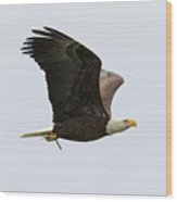 Bald Eagle Returns With Nesting Material Wood Print