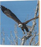 Bald Eagle Shows Its Focus Wood Print