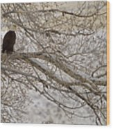 Bald Eagle-signed-#4879 Wood Print