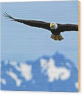 Bald Eagle Soars Over Hood Canal Wood Print