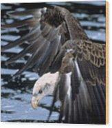 Bald Eagle Strikes Wood Print