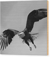 Bald Eagle Symbol Of Strength Wood Print