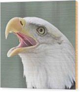 Bald Eagle Talking Wood Print
