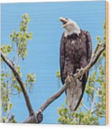 Bald Eagle Warning Wood Print