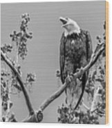 Bald Eagle Warning In Black And White Wood Print