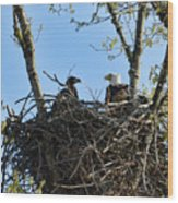 Bald Eagle With Chick In Nest 031520169849 Wood Print