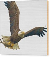 Bald Eagle With Fish Wood Print