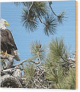 Bald Eagle With Nestling Wood Print