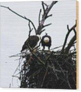Bald Eagles Along The Delaware River Wood Print