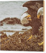 Bald Eagles Family Discussion Wood Print