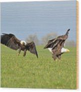 Bald Eagles Wood Print