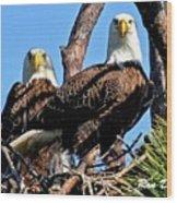 Bald Eagles In Nest Wood Print