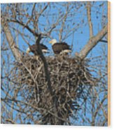 Bald Eagles Working On The Nest   3682 Wood Print