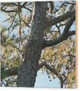 Bald Head Tree Wood Print