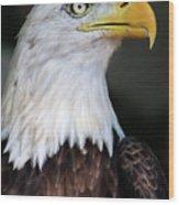 Baldeagle-6903 Wood Print