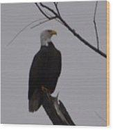 Bald Eagle 2 Wood Print