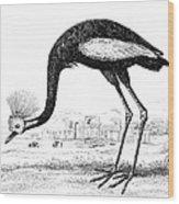 Balearic Crane Wood Print