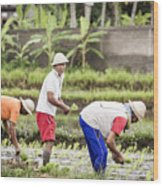 Bali Farming Wood Print