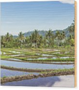 Bali Rice Paddies Wood Print