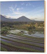 Bali Terrace Rice Field Wood Print