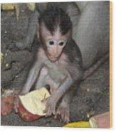 Balinese Baby Monkey Eating Wood Print