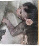 Balinese Baby Monkey Feeding Wood Print
