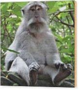 Balinese Serious Monkey Wood Print