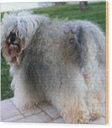 ball of fur Havanese dog Wood Print
