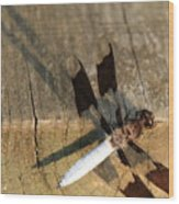 Ball Point Dragon Fly Wood Print