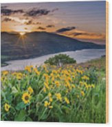 Balsamroot At Sunrise Wood Print