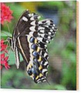 Baltimore Checker Spot Butterfly Wood Print