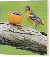 Baltimore Oriole Having Breakfast This Morning Wood Print