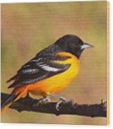 Baltimore Oriole IIi Wood Print