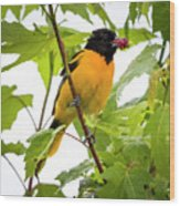 Baltimore Oriole With Raspberry  Wood Print