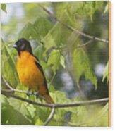 Baltimore Orioles  Wood Print