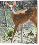 Bambi1 Wood Print