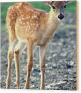 Bambi2 Wood Print
