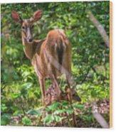 Bambi's Mom Wood Print
